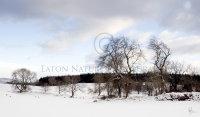 Llandegla snow