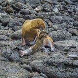 Galapagos Sea Lions 2