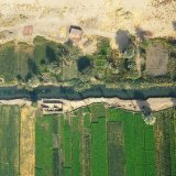 Egypt, Sugar Cane irrigated by the Nile