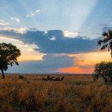 Tanzania, Katavi Plain 2
