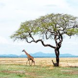 Tanzania, Katavi plain 1