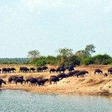 Uganda, River scene