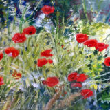 Summer Poppies