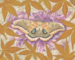 Silkmoth Spectacle