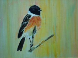 A Male Stonechat