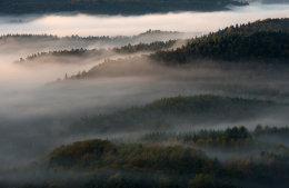 Pfälzer Wald