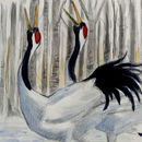 Displaying Red Crowned Cranes