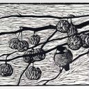 Chickadee and winter apples
