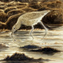 Curlew at Dusk