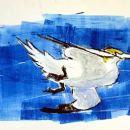 Hang gliding gannet