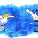 Hang gliding gannets