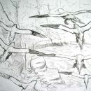Gannet studies