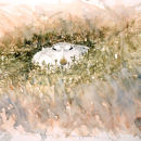 Mountain Hare in sleet