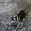 Rabbit wrongfoots dog