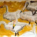 Whooper Swan studies