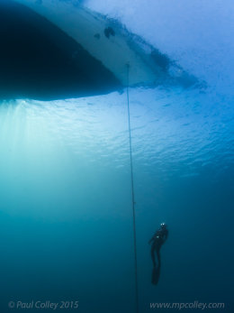 paul colley freediving