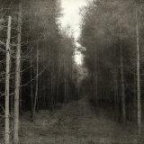 Miledyke Wood