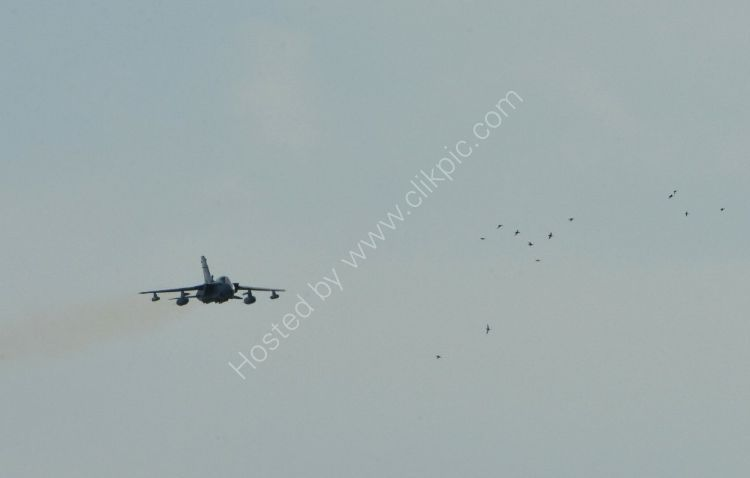 Aircraft - Tornado GR4 - And a flock of birds