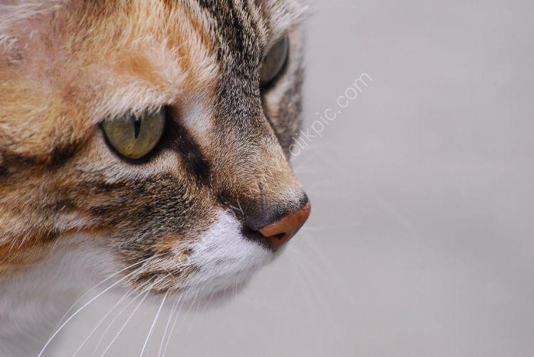 Animal - Cat (Felis catus) - Concentration