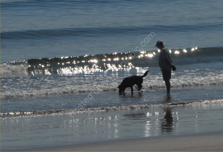 Animal - Dog (Canis lupus familiaris) - One man and his dog on the beach