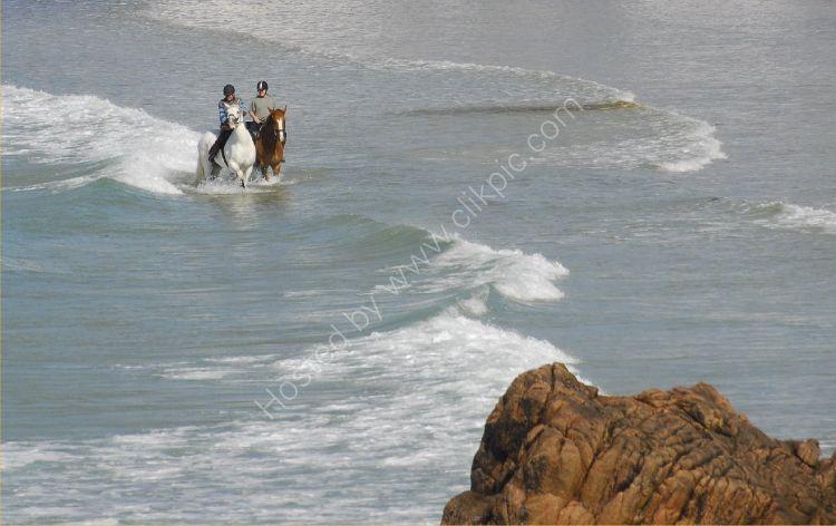 Animal - Horse (Equus ferus caballus) - Sea Horses
