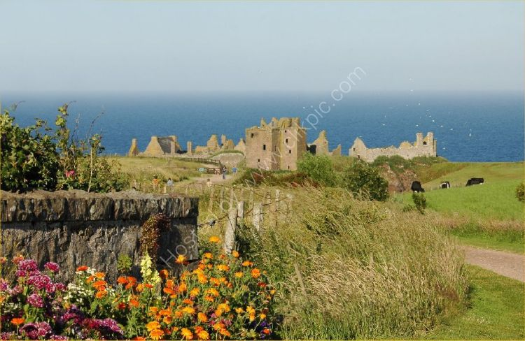 Castle - Dunnottar Castle (with Flowers)