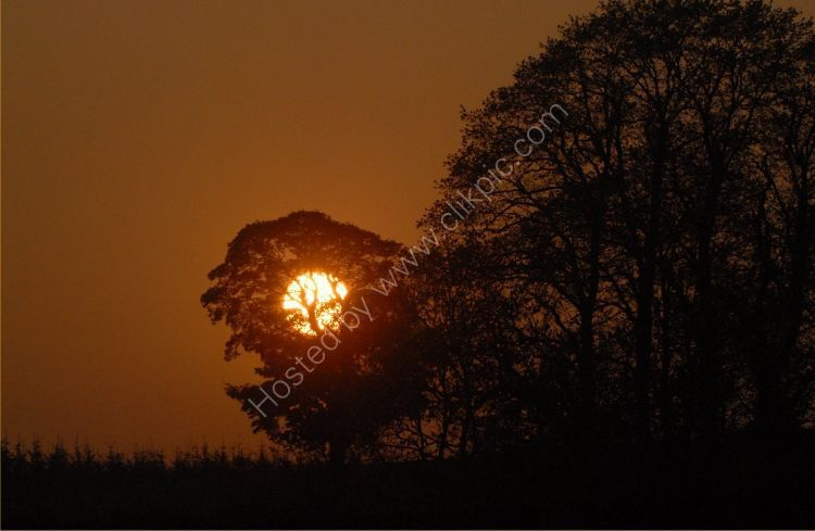 SCOTLAND - Sunset Tree