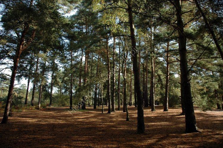 Tree - Trees surrounding Elstead Moat