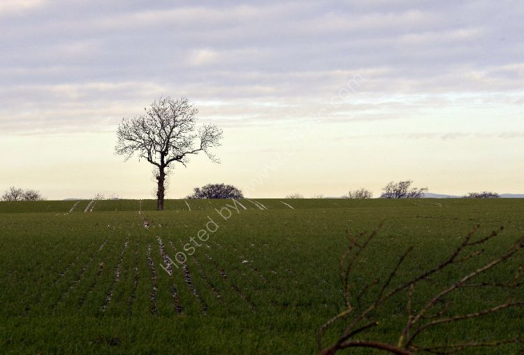 Winter - Lonely Tree
