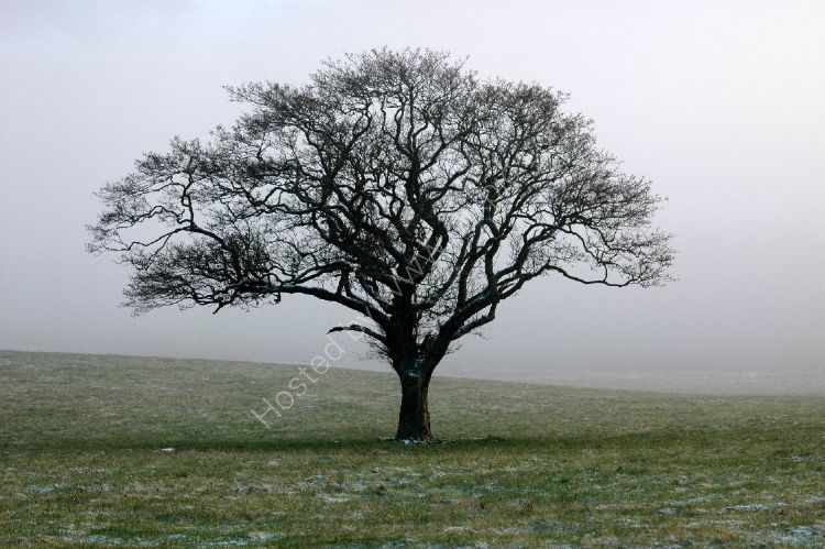 Winter - Misty Tree