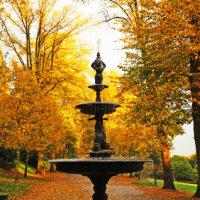 Arboretum Gold