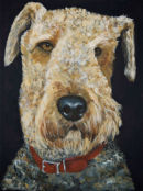 Airedale.    Hector in his red collar