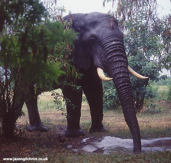 Garden elephant