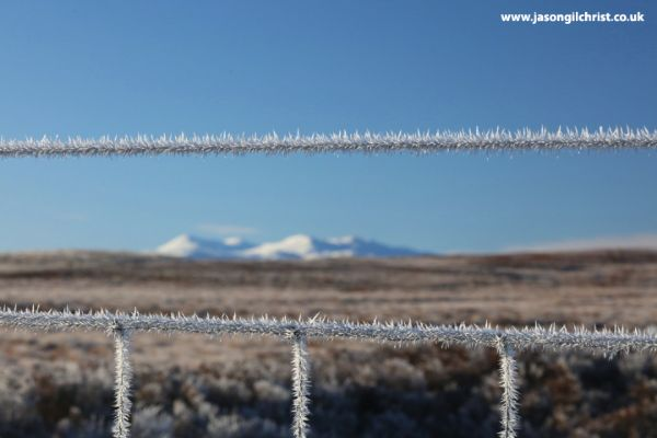 Through the frosty fence...