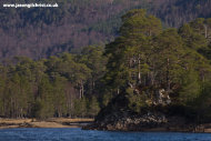 Caledonian forest and loch; Glen Affric