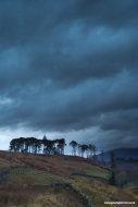 Trees in Glen Strontian