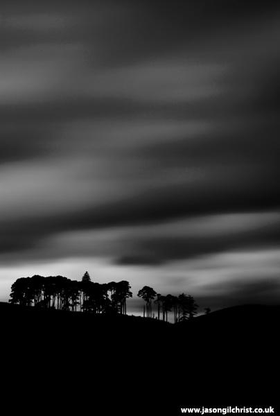 Glen Strontian Pine Stand Silhouette