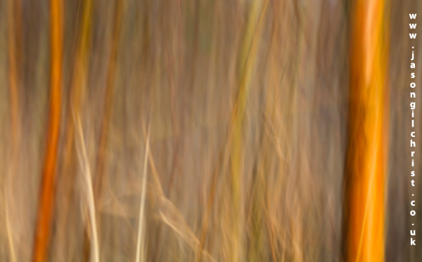 Sunrise amongst the undergrowth abstract