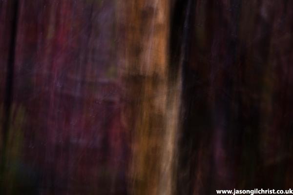 Moody tree abstract