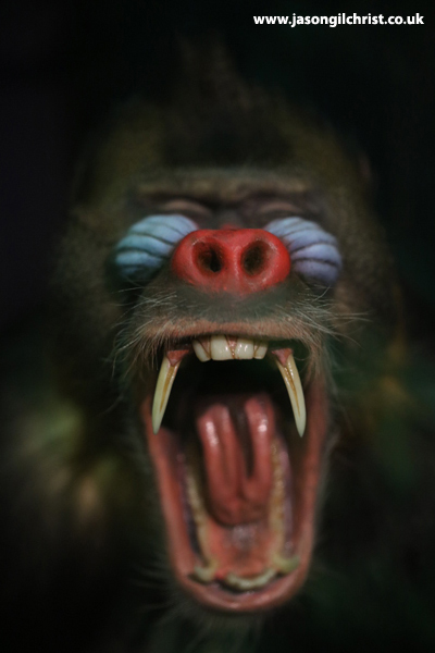 Mandrill - Monkey Business