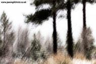 Three pines of Glenmore