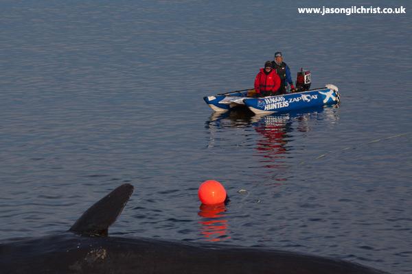 The Joppa whale