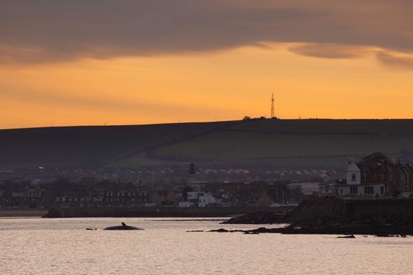 Sperm whale-dead-Joppa-Portobello-Edinburgh-Scotland-Physeter macrocephalus-02