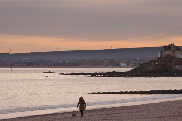 Sperm whale-dead-Joppa-Portobello-Edinburgh-Scotland-Physeter macrocephalus-04
