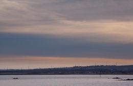 Sperm whale-dead-Joppa-Portobello-Edinburgh-Scotland-Physeter macrocephalus-09