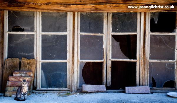 Cat and window, Roc