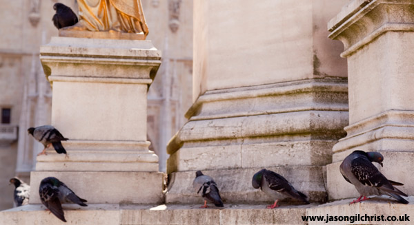 Holy pigeons on parade: at Zagreb Cathedral