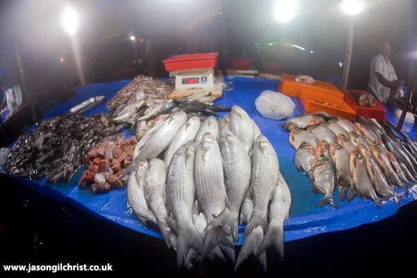 Nocturnal Fish Market