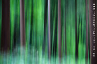 Green forest of Samoborska gorje