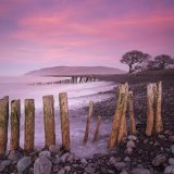 Pink at Porlock